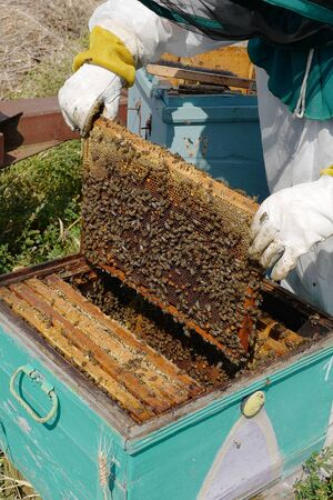 The bee-keeper takes out a framework with honey from a beehive Banco de Imagens
