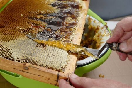 The bee-keeper cuts off a knife wax from honeycombs Stock Photo