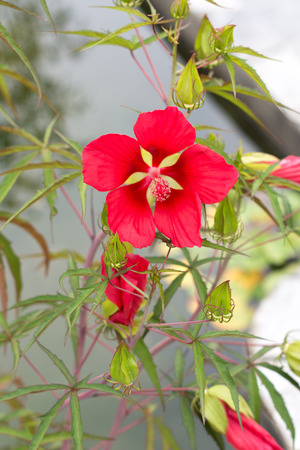 two red flowers on tree