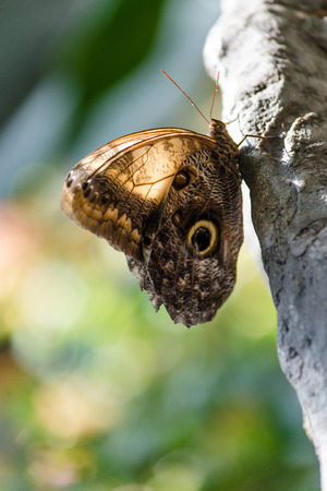 Portrait of a butterfly posing on a rock Stock Photo