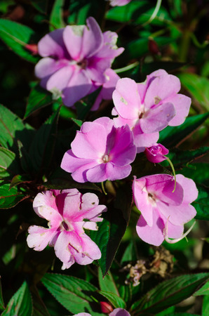 Little pink flowers with leafs