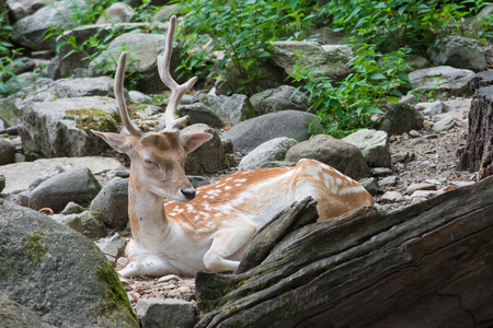 a deer sleeping in a forest Stock Photo