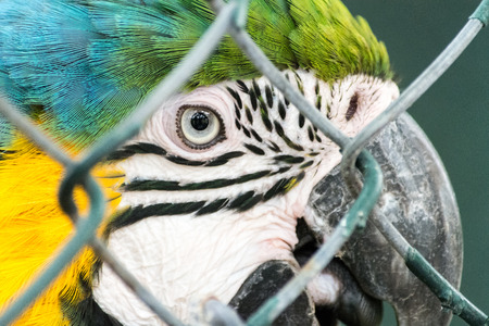Multicolor parrot in cage Stock Photo