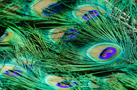 close-up pattern of peacock feathers