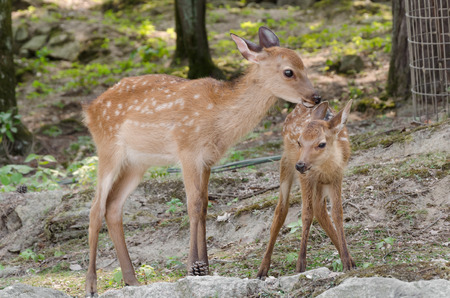 a baby deer with his mother
