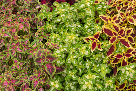 composition of green and colorful ornamental plants
