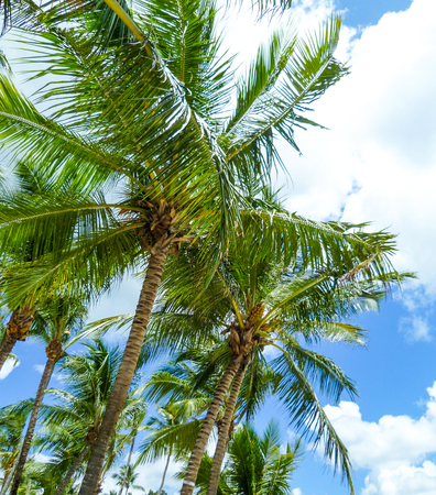 Green palm trees under a blue Caribbean sky