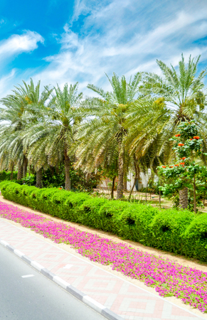 Relaxing palm trees under the sun in Dubai Stock Photo