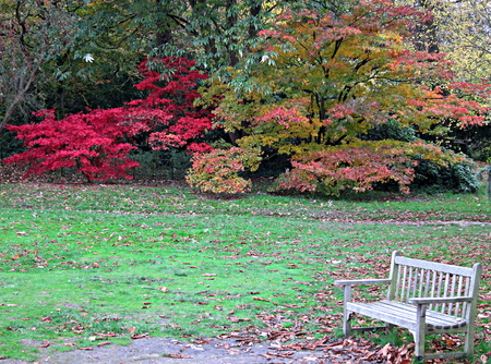 Lonely Wood White Bench at a Wimbledon Park in Autumn, at the end of the day
