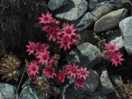 pink flowers Within rocks