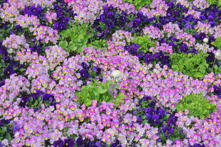 spring bed: The picture was taken in the spring in Germany. The picture shows the flower bed. Brightness and Number of colors give the impression of a flower carpet.