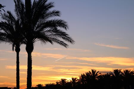 The picture was taken in Spain, Salou. The picture shows the night sky, where visible condensation trail from aircraft engines. In the foreground silhouettes of palm trees.