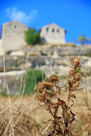 The photo was taken on the peninsula of Crimea. The picture shows a thistle dried out from the July heat against the backdrop of an old mountain settlement.
