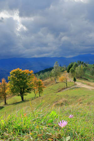 The photo was taken in Ukraine, in the Carpathian mountains. The picture shows the last ray of sun illuminating a meadow flower before a storm in the mountains. In the fall season.