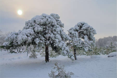 The photo was taken in the city of Odessa, in a park called Victory Park. In the photo there is an evening in a winter snow-covered park.