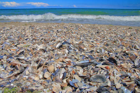 In the photo, the Black Sea coast is covered with various shells.
