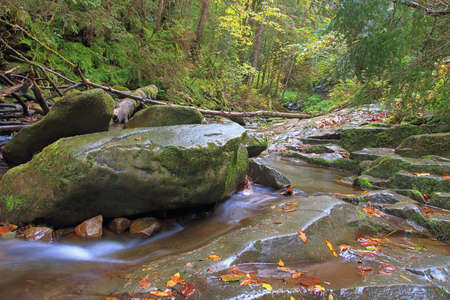 The photo was taken in the Ukrainian part of the Carpathian Mountains. The picture shows a stream with clear water flowing from the mountains in the autumn forest. 免版税图像