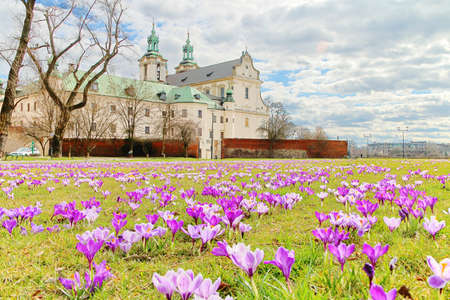 Photo taken in Krakow, Poland. In the photo, spring flowers are crocuses in front of the so-called church on the rock. 新闻类图片
