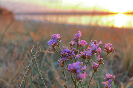 The photo was taken in Ukraine near a salty estuary called Kuyalnik. The picture shows the sunset during the Indian summer captured through wildflowers. 免版税图像