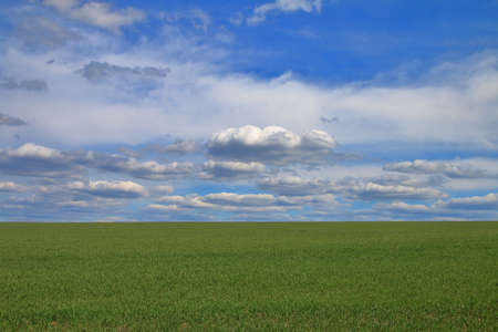 The photo shows a green field in spring under a blue, slightly cloudy sky.