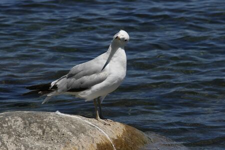 Questioning the Seagull 版權商用圖片