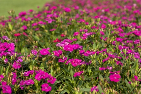 Purple Flower Fresh Garden Green Natural Beauty. Stock Photo ...