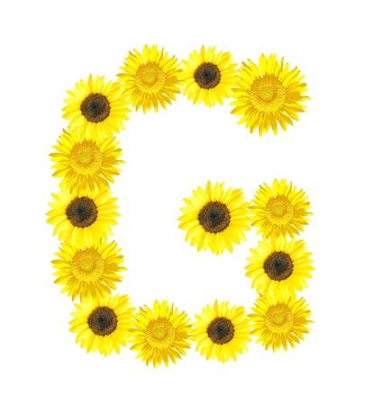 Sunflower alphabet G isolated on white background. photo