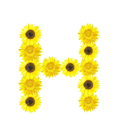 Sunflower alphabet H isolated on white background. photo