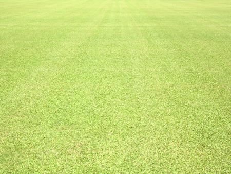 grassy plot: greensward football field background Green field