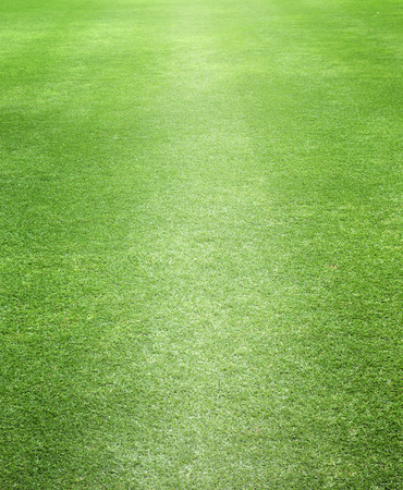 ゴルフ緑の草背景テクスチャの抽象的な植物。 写真素材 - 29983690