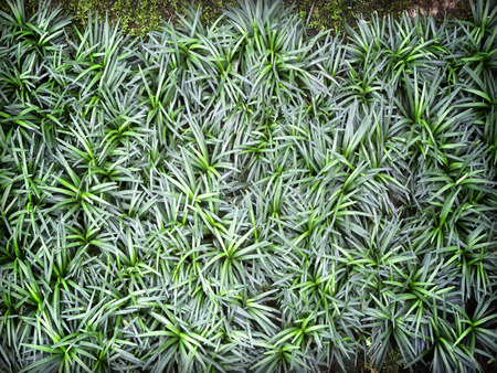 green leaf background with dark green leaves natural grass surfaces. photo