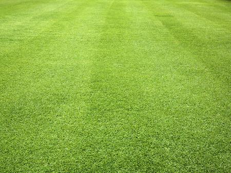 Green grass background pattern the outdoor golf course. Standard-Bild