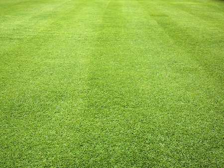 Green grass background pattern the outdoor golf course. Foto de archivo