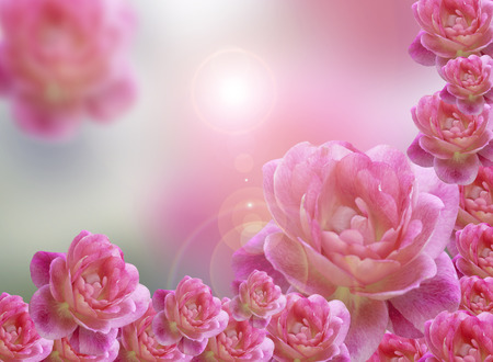 represents: Pink roses background represents the abstract nature of love. Stock Photo