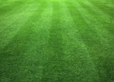 Green Grass Lawn natural patterns background texture. Archivio Fotografico