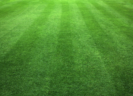 Green Grass Lawn natural patterns background texture. Stock Photo