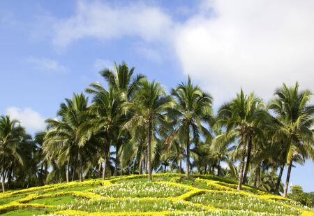 jardines flores: Cocoteros verdes y jardines de flores frescas. Foto de archivo