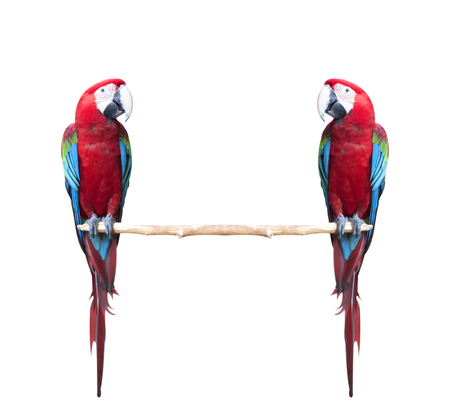 Colorful Red-and-green Macaw birds isolated on white background
