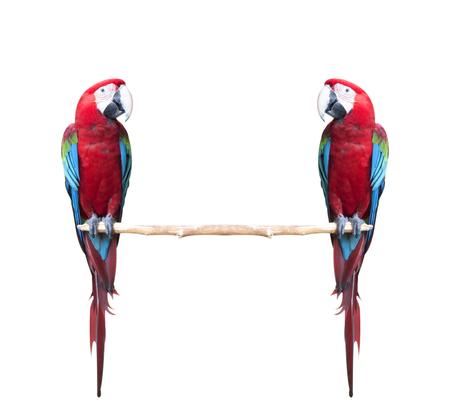 カラフルな赤と緑のコンゴウインコ鳥白い背景で隔離 写真素材 - 33341679