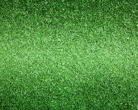 campo di calcio: Campo da golf Prato campo di calcio esterno texture di sfondo con colori vivaci.