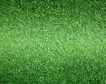 Lawn golf course outdoor football field background texture with bright colors.