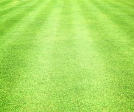 terrain de foot: Vert pelouses des terrains de golf et des terrains de football. Banque d'images