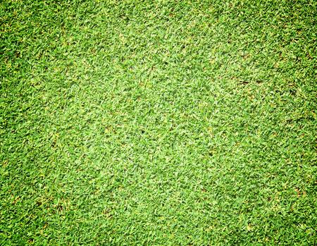 grass: greensward football field background Green field nature.
