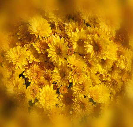yellow blossom: Colorful flower pattern background yellow blossom naturally. Stock Photo