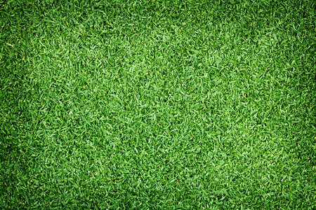 bluegrass: Golf Courses green lawn abstract textured background.