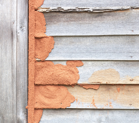 Termites eat wood wall weathering old wooden houses.
