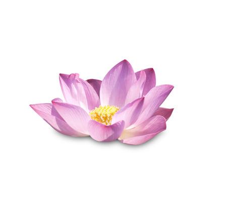 Lotus Lotus bourgeons de fleurs et de plantes fleurs Lotus. Banque d'images - 41825665