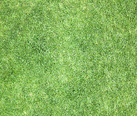 cancha de futbol: Campo de golf de hierba verde la textura de fondo.