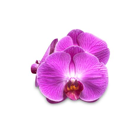 Nature orchid flower isolated on white background.