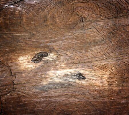 hardwood: natural hardwood tree cracked wood board background. Stock Photo